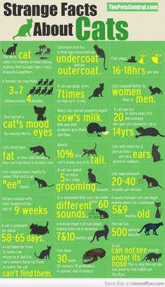 """Strange Facts About Cats I just tried the """"ee"""" one...Yep, all my cats respond."""