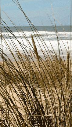 Jorge Ben Jor e Ivete Sangalo - Por causa de você menina Jorge Ben Jor - A Minha Menina & Que Maravilha & Zazueir. Sea And Ocean, Ocean Beach, Beach Day, Ocean Waves, Cottages By The Sea, Beach Cottages, Mundo Gif, Jorge Ben, Beach Grass