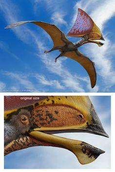 Tupandactylus imperator by on DeviantArt Dinosaur Fossils, Dinosaur Art, The Good Dinosaur, Dinosaur Crafts, Reptiles, Mammals, Dinosaur Illustration, Dinosaur Pictures, Extinct Animals