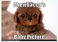 Chewbacca's baby  picture..Dawww!