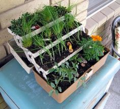 fishing tackle box as a planters  image | Old tackle box made into a planter..only pretty