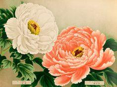 No.3 Kigyoku and No.4 Akashigata -- Peony -- View By Flower -- RHS Prints