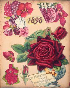 Victorian Scrapbook Flowers 1898 ~ Ephemera