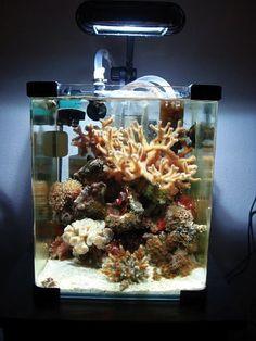 nano cube tank with clown fish and corals, nature aquarium