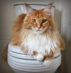 My throne needs adornment. Wait... I am the adornment!