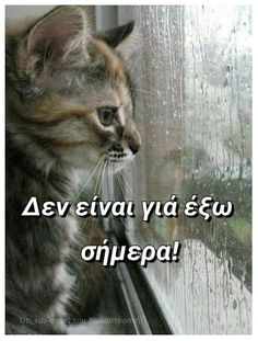 Night Pictures, Cute Pictures, Cute Cats, Funny Cats, Thank You Happy Birthday, Funny Greek Quotes, Funny Memes, Jokes, What Day Is It
