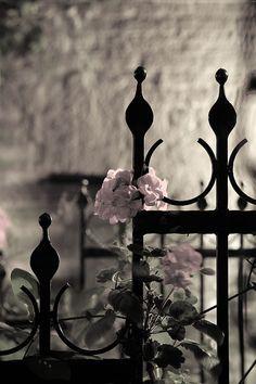Photo by Petteri Sulonen Love Garden, Garden Art, Black Garden, October Flowers, Midnight Garden, Modern Fence, Iron Work, Garden Gates, Flower Photos