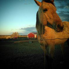#countryhomefarm #sunsetdinner #beautifulhorse #kaliki