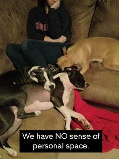 """We have NO sense of personal space."" ~ Dog shaming Pit Bull. so true"