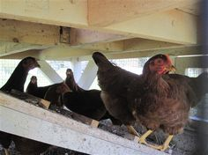 Maple Hill Farm Bed & Breakfast sits on a 55-acre historic working farm in the Pocono Highlands in Pennsylvania. There are hens for eggs, gardens for veggies, and more. If you want, you can participate in farm experiences with organic gardening and farm animals.