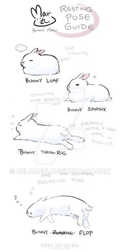 Maru's Bunny Relaxing Pose Guide by zeldacw on DeviantArt - Maru's Bunny Relaxing Pose Guide by zeldacw. Drawing Tips, Drawing Reference, Animal Drawings, Cute Drawings, Animals And Pets, Cute Animals, Bunny Care, Pet Rabbit, Cute Bunny