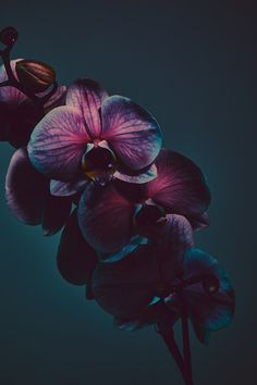 everything is a road. Orchid Wallpaper, Flower Phone Wallpaper, Iphone Background Wallpaper, Cellphone Wallpaper, Dark Flowers, Beautiful Flowers, Cactus E Suculentas, Flower Aesthetic, Jolie Photo