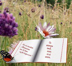 Versete de Aur : 01.11.2013 - 01.12.2013 Aur, Osho, Books, Libros, Book, Book Illustrations, Libri