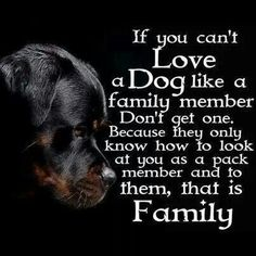 So true! And I love the Rottweiler! Even better! Dog Quotes, Animal Quotes, Family Quotes, Life Quotes, Animal Poems, Pitbull Terrier, Bull Terriers, Boston Terriers, Yorkshire Terriers