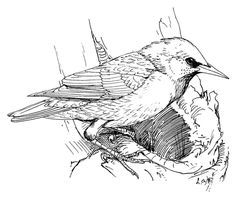 31 Best Bird Coloring Pages Images On Pinterest