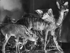 Three Species of African Antelope in Storage at the American Museum of Natural History photographed by Margaret Bourke-White (1937)