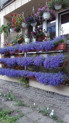 Most vesd el a lobéliát! – olvasói tanácsok – Balkonada Asd, Quilling, Gardens, Outdoor Decor, Home Decor, Plant, Bedspreads, Decoration Home, Room Decor