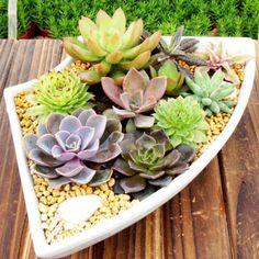 150pc-Sementes-De-Lithops-Misto-suculentas-Casa-Jardim-Plantas-Raras-Pedras-Vivas-Cactus