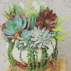 Check this amazing succulent arrangement. #succulents #arrangement #tree #plant #garden #nature #flora #evrgrdn