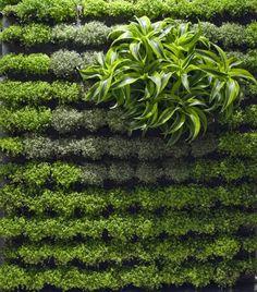 콘크리트 옹벽이나 경사면을 녹화시키기 위한 개발에서 시작된 벽면녹화의 기술은 오늘날 땅과 벽을 구분하지 않고…