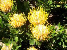 Australian Flowers | Australian Flowers