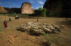 Navajo sheep herding - Canyon de Chelly       ..by richoltzin           .......www.dailykos.com