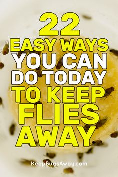 Keep Bugs Away - Best Ways to Control Your Pest Problem Keep Flies Away, Get Rid Of Flies, Keep Bugs Away, Handy Tips, Helpful Hints, Green Pest Control, Porch Ideas, Mice, Cleaning Hacks