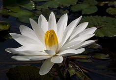 Flower from Bali - Indonesia