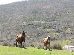 Paisajes de La Rioja Caballos