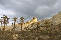 Palm Trees, Desierto de Tabernas photo by Martyn Thompson