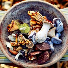 Forget button mushrooms, wild mushrooms such as cep, chanterelle, morels and oyster are full of flavour and pack a punch in these recipes.