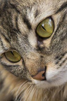 Nos olhos dos gatos vemos sinceridade; quando um gato preto cruzar seu caminho, não o despreze ou faça maldade; veja a mesma beleza que vê nestes belos olhos e sorrie pra ele