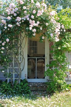 ~'New Dawn' climbing rose over doorway~Via Tricia Blakely