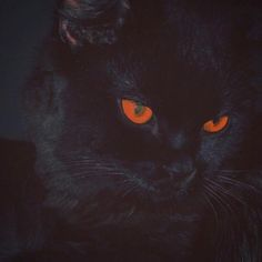 Dumbfounding Useful Tips: Cute Cat Ideas cat breeds gatos. Grunge Goth, Soft Grunge, Cat Ideas, Black Cat Aesthetic, Music Aesthetic, Creepy, Night In The Wood, Photo Chat, Aesthetic Pictures