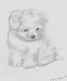 This is a sketch I made for a friend. It's a maltese puppy (those li'l creatures are so darn adorable! I just used subtle light shading, so it barely took any time at all, but when I sc. Cute Drawings, Animal Drawings, Puppy Drawings, Dog Kawaii, Maltese Dogs, Dog Coats, Little Dogs, I Love Dogs, Your Dog
