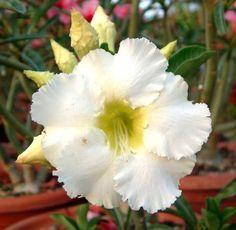 Arctic Plants Names Arctic snow live plant,
