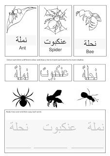 a muslim homeschool: Arabic insects