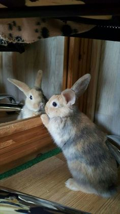 """ 🥰 animals ☺ baby bunnies, bunny rabbit и ani Cute Baby Bunnies, Funny Bunnies, Cute Baby Animals, Animals And Pets, Funny Animals, Tier Fotos, Hamsters, Guinea Pigs, Pet Birds"