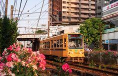 Découvrez #Tokyo autrement en vous baladant le long de la Toden Arakawa line avec ses tramway retro et ses milliers de roses de toutes les couleurs !