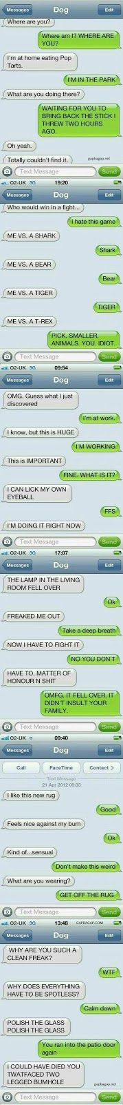 5+ Funny Text Messages ft. Funny Dogs