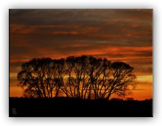 Oldrobel's Fotoreise: Tree island in the sunset