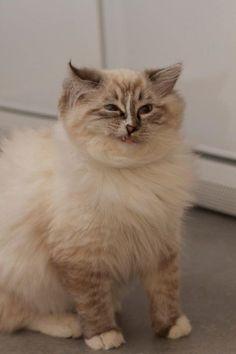 Quand vous êtes à cours de sujets de conversation. | 17 réactions de chats parfaites pour les fêtes