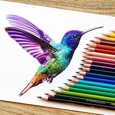 Kingfisher color pencil drawing by danstirling http://webneel.com/25-beautiful-color-pencil-drawings-valentina-zou-and-drawing-tips-beginners | Design Inspiration http://webneel.com | Follow us www.pinterest.com/webneel