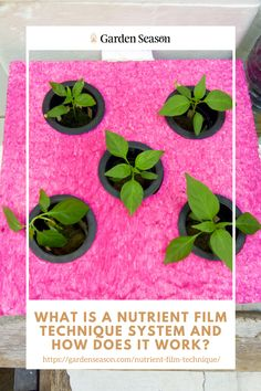 What Is A Nutrient Film Technique System And How Does It Work?  Nutrient film technique is a type of hydroponic system that is simple and yet, it can provide optimal conditions to your crops. It's an active and versatile hydroponic gardening with effective design.  Here is a thorough analysis of a nutrient film technique system. Read on and find out how it really works!