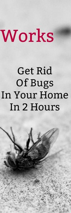 Thecomponents of this useful homemade bug spray can be found in your very own kitchen! It will get rid of mosquitoes, flies, cockroaches, ants and other bugs. Safe for children and pets.