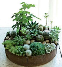 Plantjes: cactussen en vetplanten! Ideaal voor iedereen die geen groene vingers heeft, maar toch wat groens wil! #IKEAcatalogus #abitofmeandIKEA