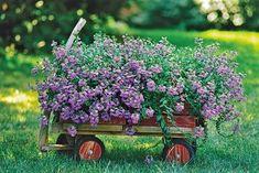 cottage garden red wooden wagon with purple flowers Wagon Planter, Chair Planter, Planter Garden, Potager Garden, Diy Planters, Pot Jardin, Radio Flyer, Deco Floral, Garden Cottage