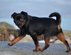 doggy style czech escort