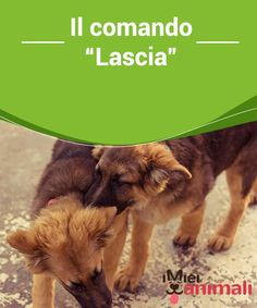 """Il comandoLascia ndash; I miei animali""""""""  I #cani devono imparare ad ubbidire ad una serie di comandi #dettati dal proprio padrone, che gli facciano capire chi è che comanda.Il comando #Lascia vi sarà utile in molte #situazioni. #Addestramento"""