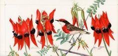 Crimson chat in Sturts desert pea 581 by Helen Fitzgerald Australian Wildflowers, Australian Native Flowers, Australian Art, Australian Christmas, Names Of Artists, Pottery Painting, Plant Design, Native Plants, Botanical Art